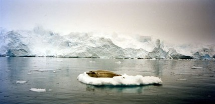 Two Seals on Ice Floe, Antarctica, 1996, Chromogenic Print, 20 x 24 inches, edition of 10